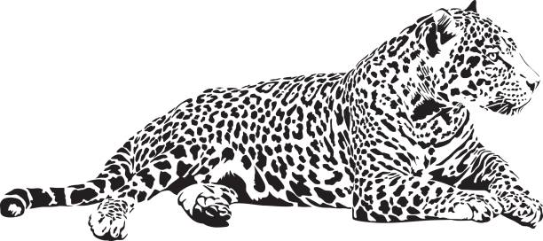 jaguar - jaguar stock illustrations