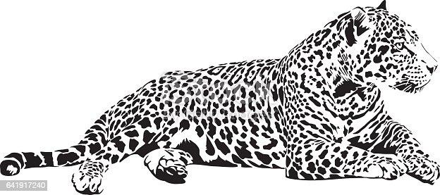 jaguar stock vector art  u0026 more images of animal 641917240