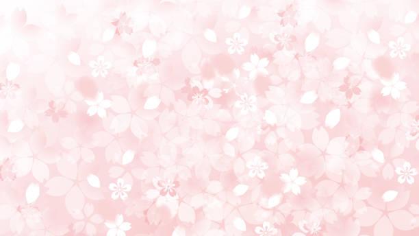日本の桜の美しい桜の背景画像 - 桜点のイラスト素材/クリップアート素材/マンガ素材/アイコン素材