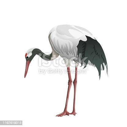 Japanese crane stands with a curved neck. Vector illustration isolated on white background