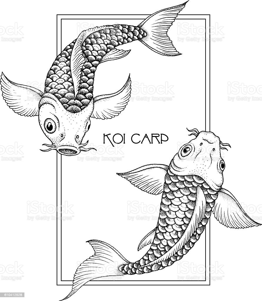 Japanese Fancy Carp. Hand drawn ink vector illustration vector art illustration