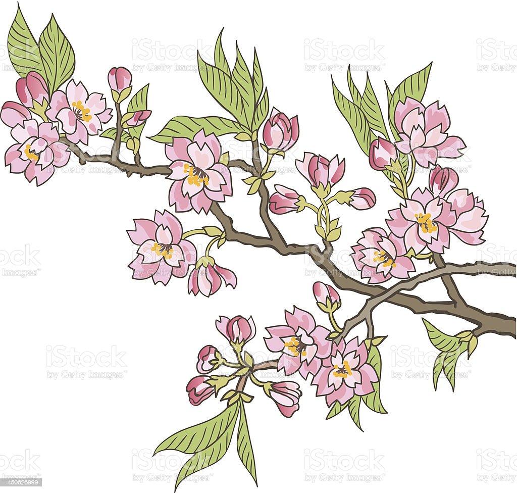 Japanese flowering cherry royalty-free stock vector art