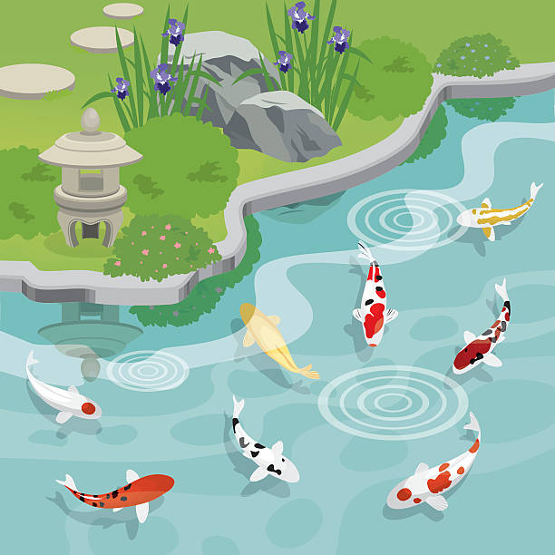 Top 60 pond clip art vector graphics and illustrations for Koi pond quezon city