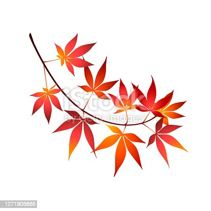 Red maple tree leaves vector illustration. Japanese maple tree branch isolated on white background. Eps 10 vector illustration.