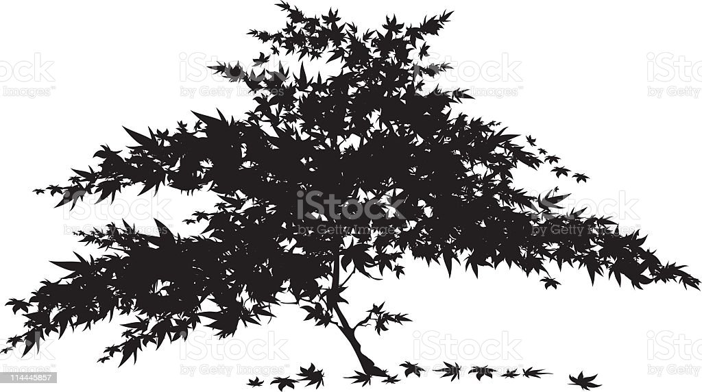 Japanese Maple Tree Stock Vector Art & More Images of ...