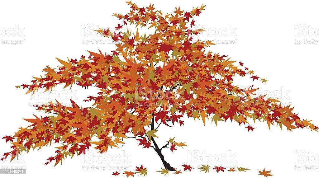 Japanese Maple Tree vector art illustration