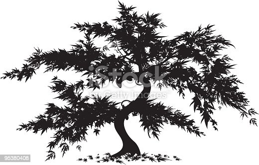 Japanese Maple Tree Silhouette.