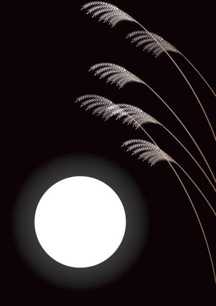 illustrazioni stock, clip art, cartoni animati e icone di tendenza di japanese pampas grass and full moon.japanese landscape. - miscanthus sinensis
