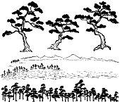 Japanese pine tree.