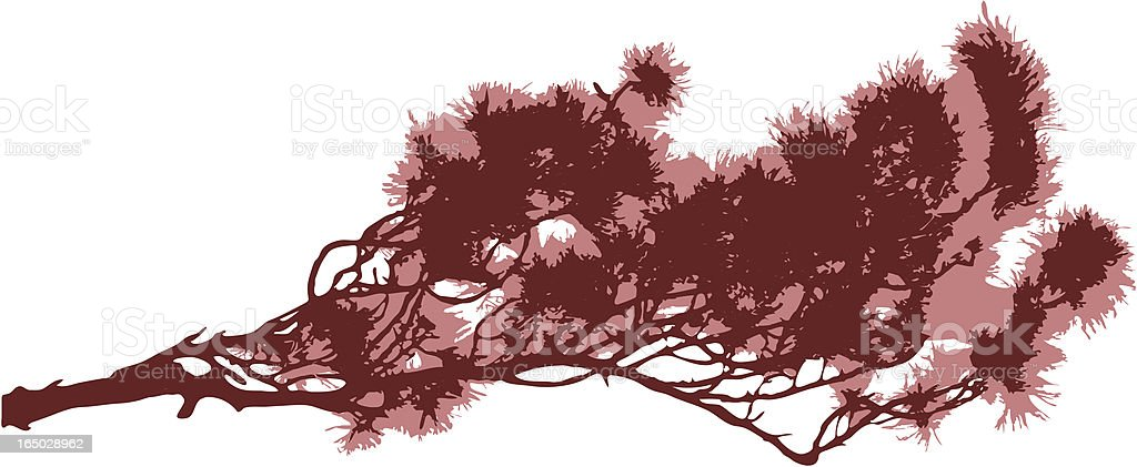 Japanese pine tree vector art illustration