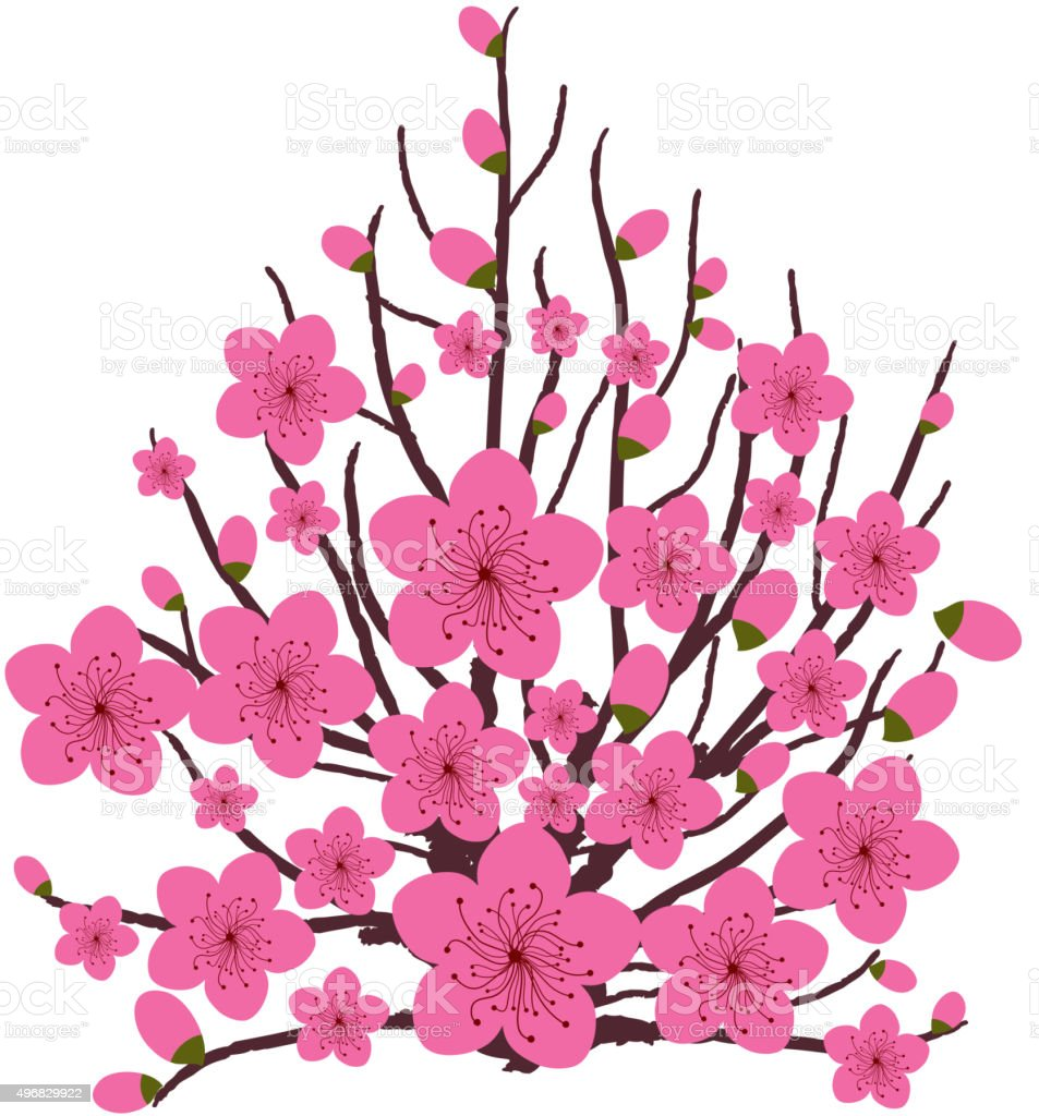 Japanese plum blossom vector art illustration
