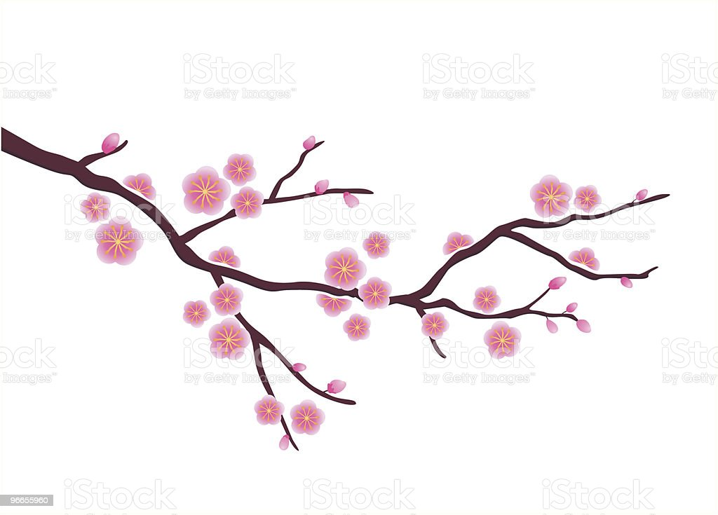 royalty free cherry blossom tree clip art vector images rh istockphoto com Japanese Cherry Blossom Illustration Baby Clip Art Cherry Blossom