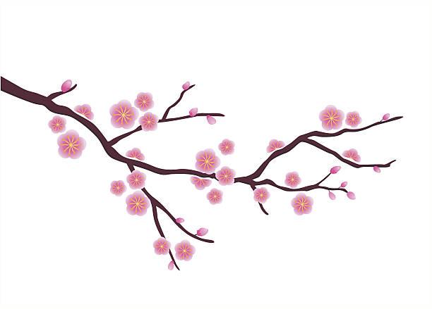 stockillustraties, clipart, cartoons en iconen met japanese plum blossom - bloesem