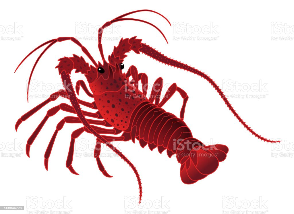 royalty free spiny lobster clip art vector images illustrations rh istockphoto com blue lobster clipart lobster clip art borders