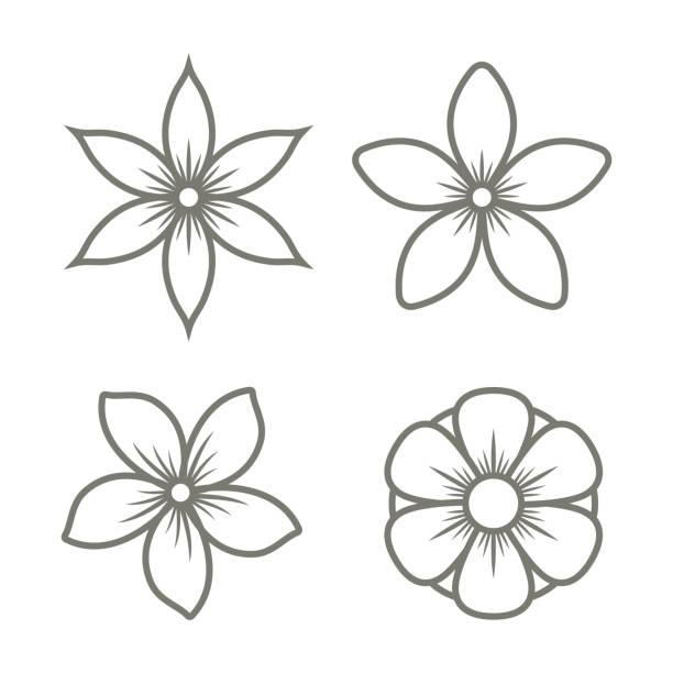 Jasmine Flower Icons Set on White Background. Vector Jasmine Flower Icons Set on White Background. Vector illustration frangipani stock illustrations
