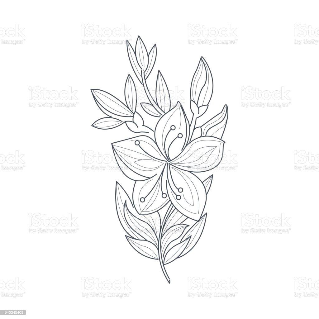 Vetores De Desenho De Flores De Jasmim Monocromatico Para Livro De