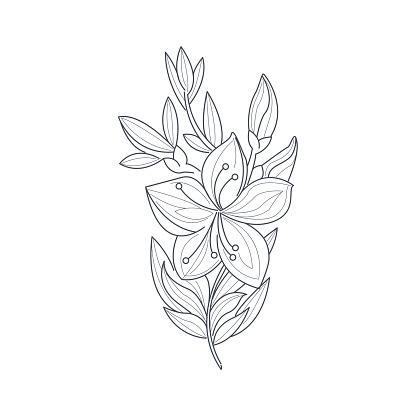Desenho De Flor De Jasmim Monocromático Livro De Colorir