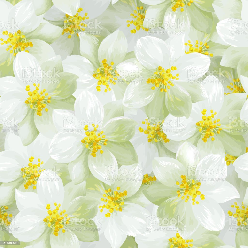Jasmine Flowers Stock Vector Art More Images Of Backgrounds