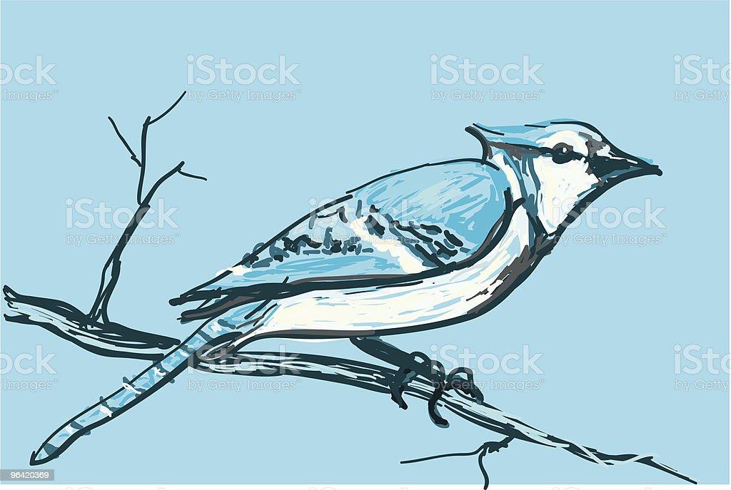 Jay vector art illustration
