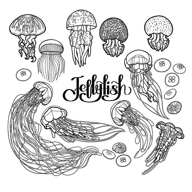 Jellyfish in line art style Jellyfish drawn in line art style. Vector ocean animals in black and white colors. Coloring book page design animal markings stock illustrations