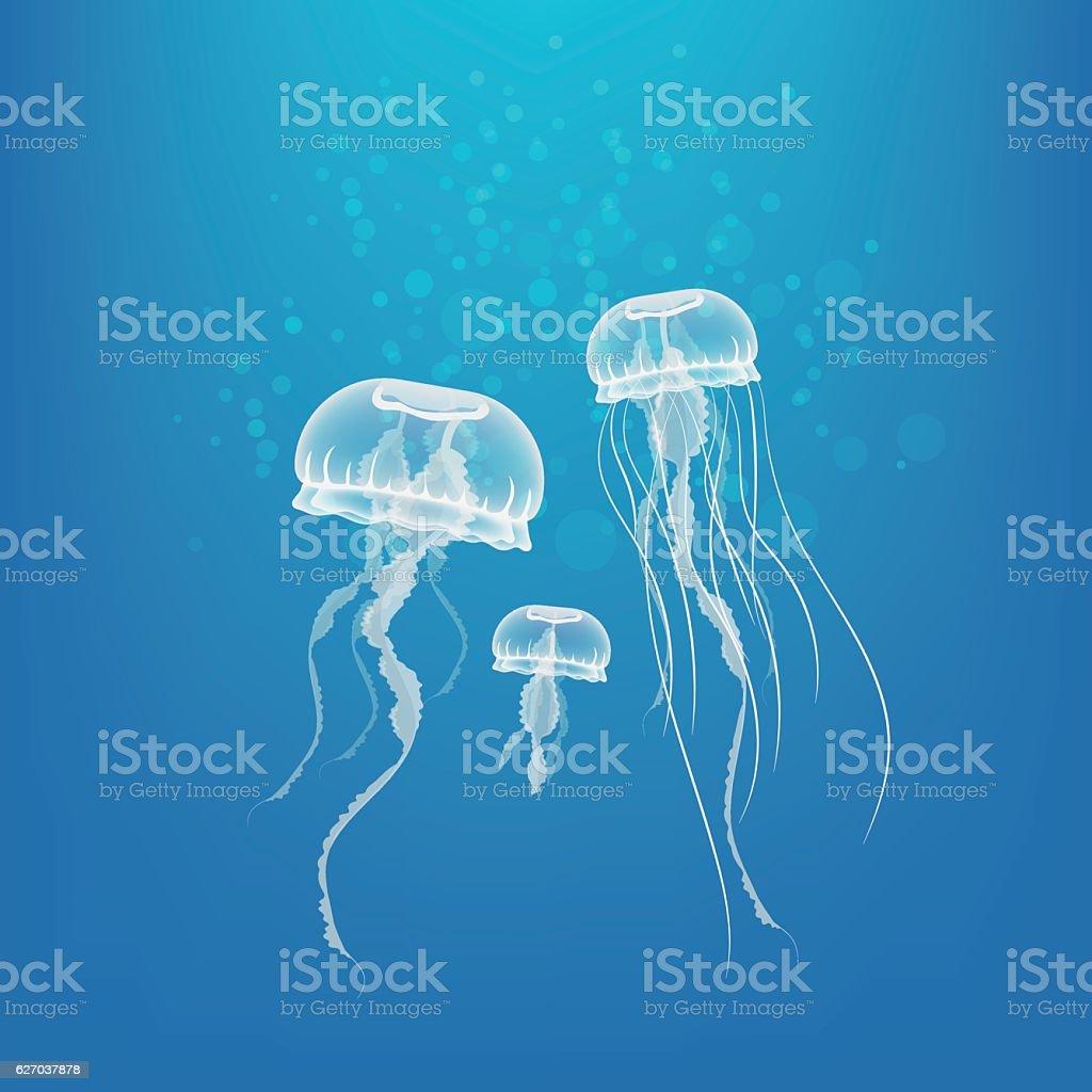Jellyfish vector art illustration