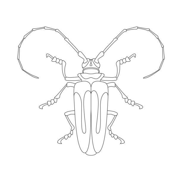 Line Drawing Jewel : Royalty free scarab beetle clip art vector images