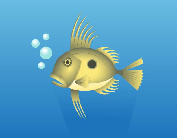 john dory fish - petersfisch stock-grafiken, -clipart, -cartoons und -symbole