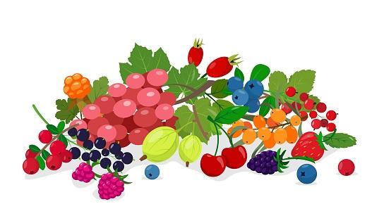 Juicy fresh wild and garden berries mix.