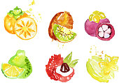 Juicy Ripe Tropical Fruit Collection, Persimmon, Mangosteen, Kiwi, Pomelo, Lychee, Carambola Watercolor Hand Painting Vector Illustration on White Background.