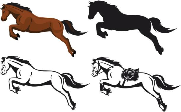 jumping horse in color contour silhouette vector art illustration