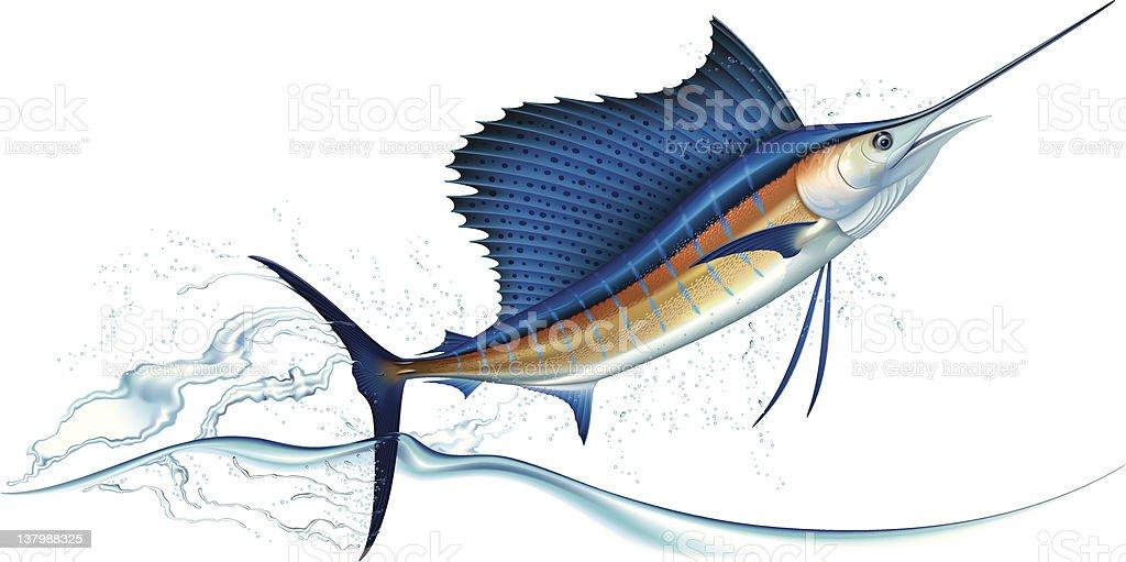 royalty free sailfish clip art vector images illustrations istock rh istockphoto com sailfish clipart black and white Sailfish Paintings