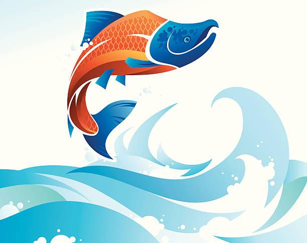 Jumping Salmon vector art illustration