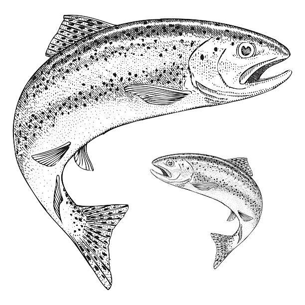 illustrazioni stock, clip art, cartoni animati e icone di tendenza di salto trota illustrazione - trout