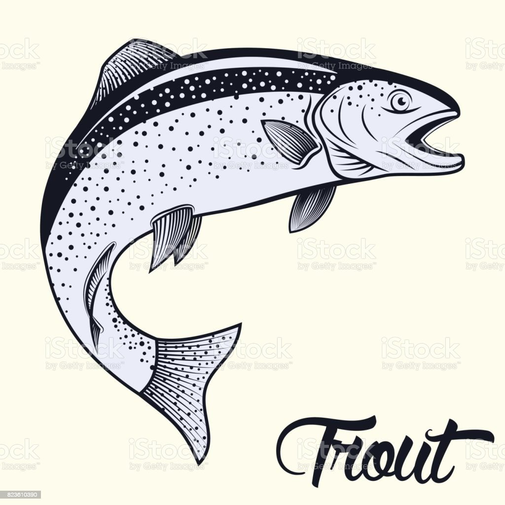 Jumping trout isolated vector art illustration