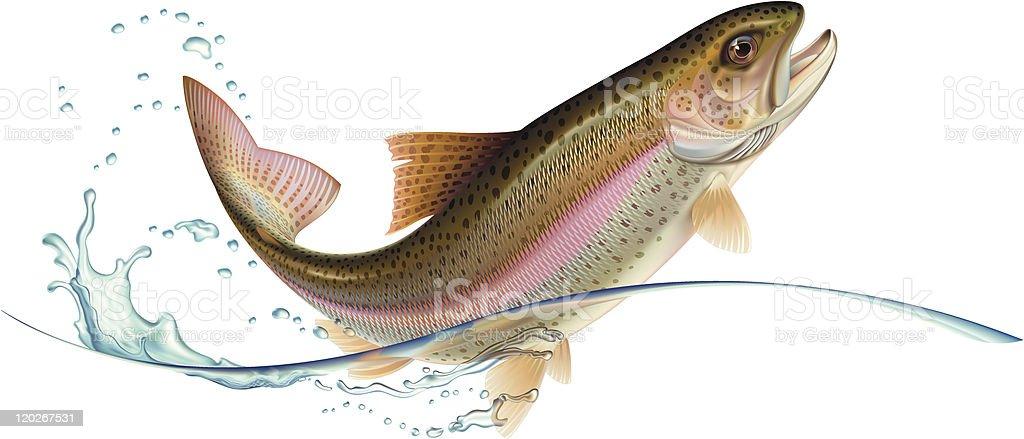 Jumping trout vector art illustration