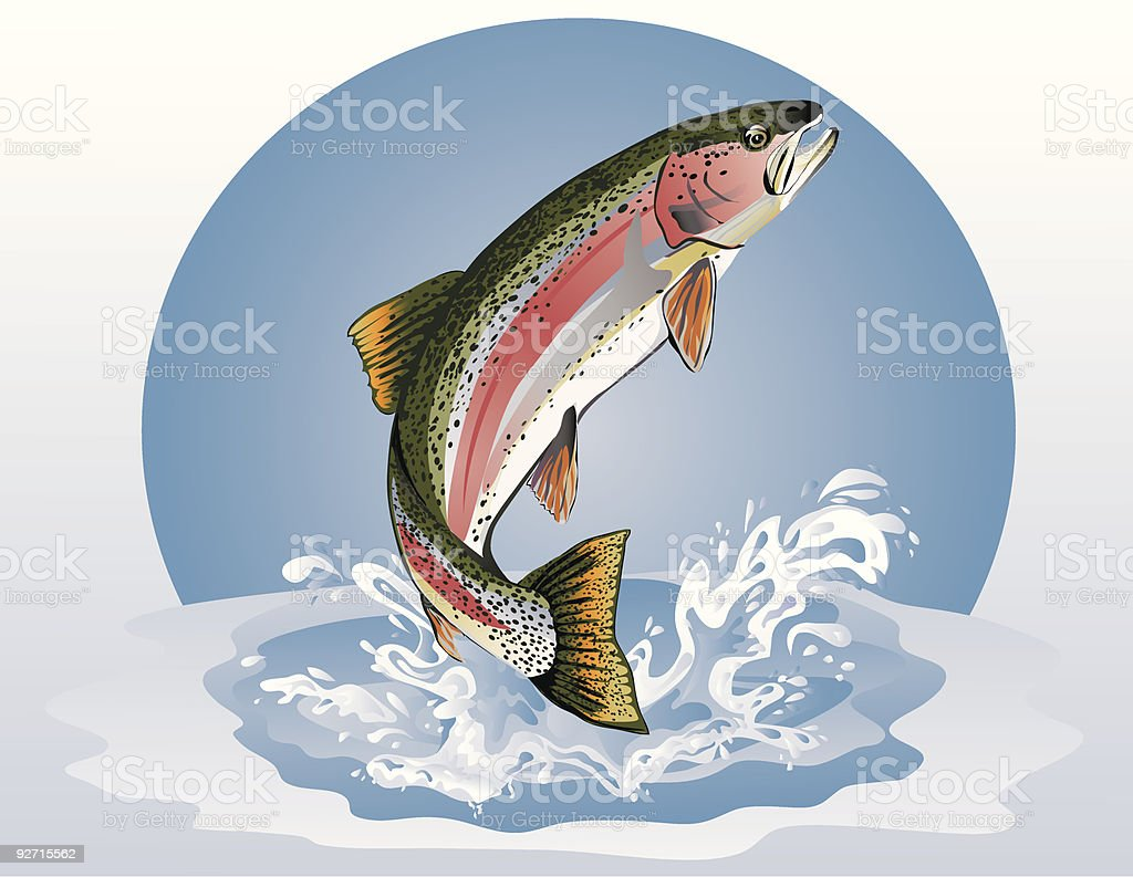 Jumping Trout (Rainbow) vector art illustration