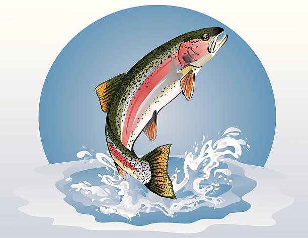 illustrazioni stock, clip art, cartoni animati e icone di tendenza di saltare trota (arcobaleno - trout