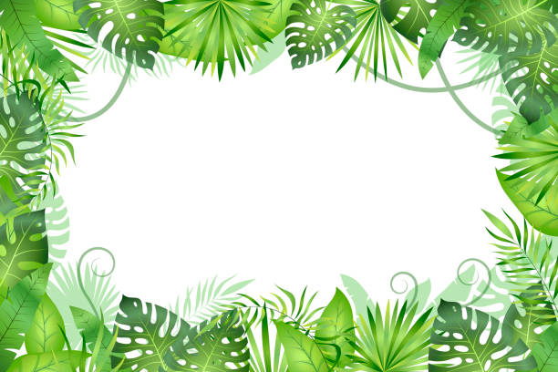 jungle background. tropical leaves frame. rainforest foliage plants, green grass trees. paradise african wildlife jungle - jungle stock illustrations