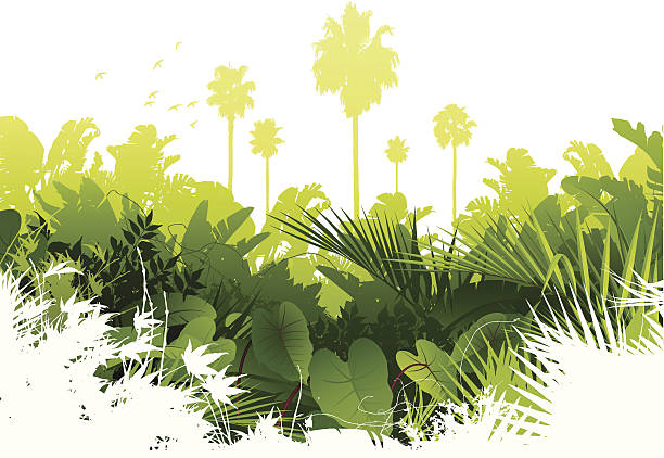 Jungle background Lush green tropical rainforest background. Global colours are easily modified. amazon stock illustrations