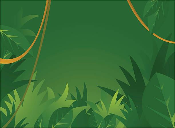 royalty free amazon rainforest clip art vector images