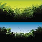 Jungle backgrounds
