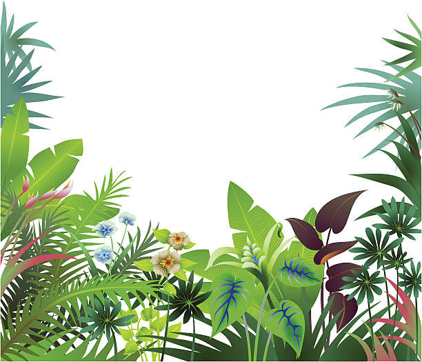 Jungle Border 3 separate layers of foliage from the rain forest or tropics form a border.  bird of paradise plant stock illustrations