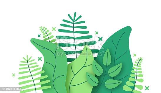 Jungle Foliage Plants