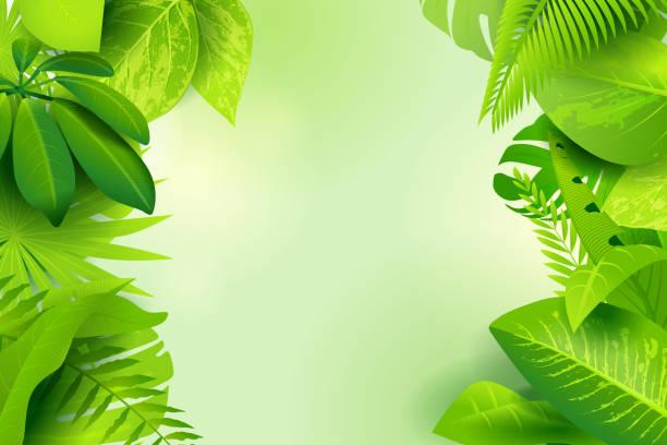 Dschungelgrüner Hintergrund – Vektorgrafik