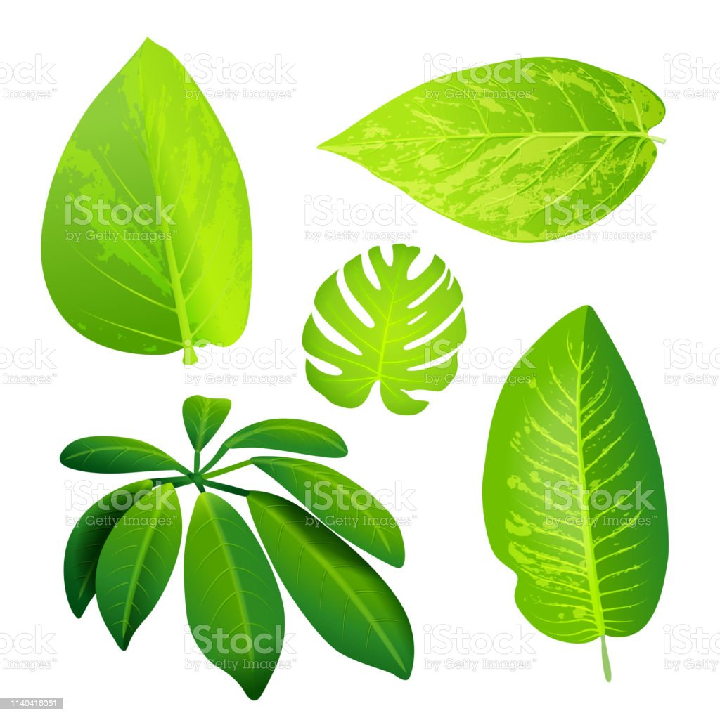 Jungle green leafs- collection. vector art illustration