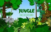 jungle rainforest background. Vector illustration