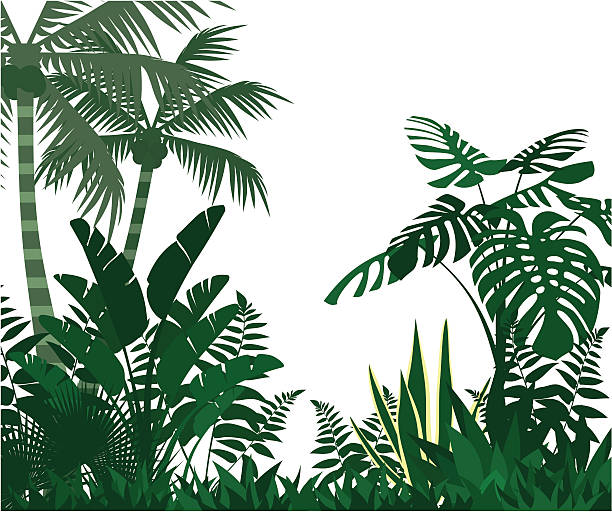 jungle - palm tree stock illustrations