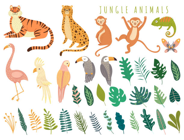 Jungle wild animal and exotic bird with exotic tropical leaves Jungle wild animal and exotic bird with exotic tropical leaves. Set with Isolated vector of tiger, monkey, leopard, chameleon, cockatoo, flamingos, parrot, cockatoo, toucan. Cartoon illustration exotic animals stock illustrations