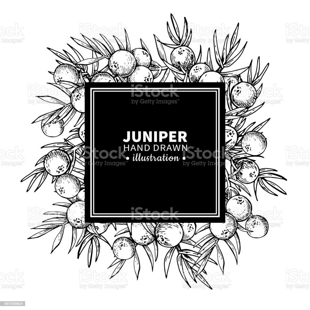Juniper vector drawing frame. Isolated vintage  template of berr vector art illustration