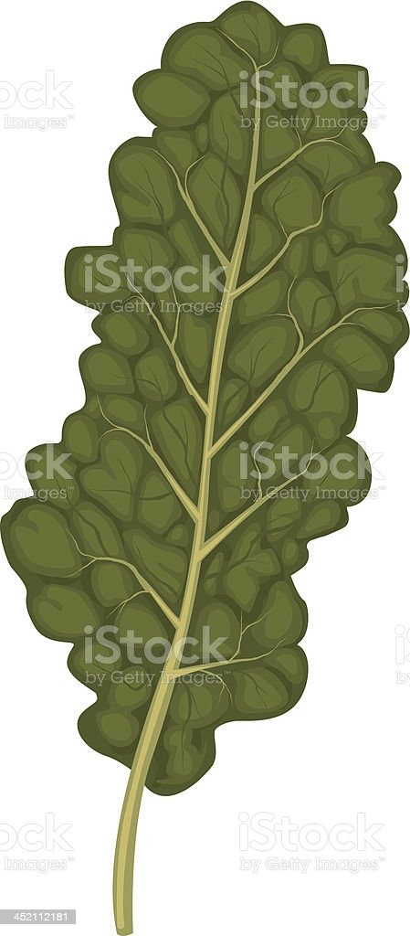 kale leaf royalty-free stock vector art